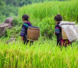Čo robiť vo Vietname