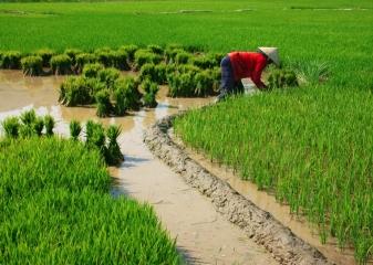 rýžová pole Vietnam